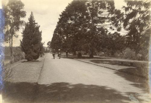 Women cycling through the Botanic Gardens, Brisbane, 1896