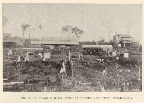 Mr Heale's dairy farm at Kureen (Atherton Tablelands), 1918
