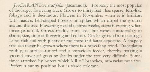 Jacaranda from Harry Oakman, Gardening in Queensland, 1960