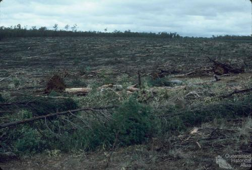 Clear-felled woodland, Injune district, 1986