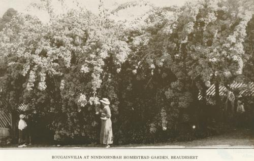 Nindooinbah Homestead garden, Beaudesert, 1935
