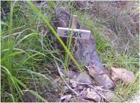 Memorial, Tamborine Mountain Road, 2009