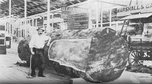 Cedar log at the 1897 exhibition, Bowen Park