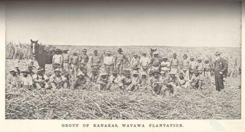 Group of South Sea Islanders, Watawa Plantation, Bingera, 1897