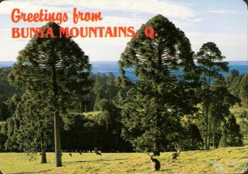 Bunya Mountains postcard