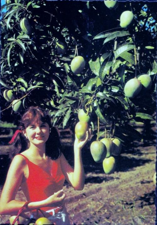 Promotional postcard for the Bowen mango