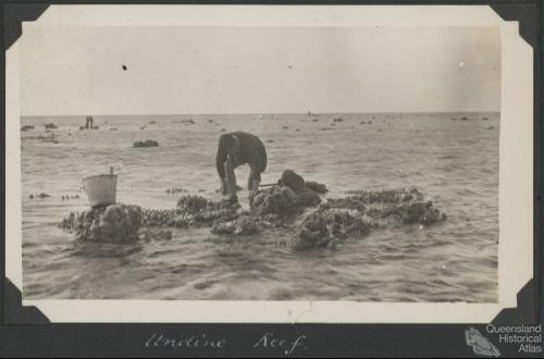 Collecting at Undine Reef, Low Isles, 1928