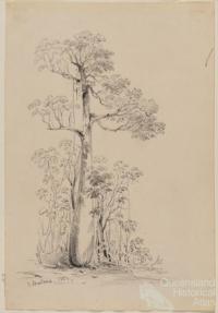 Cunningham's Gap 1851