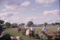 Cattle walk-by at the show, Barcaldine, 1962