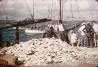 Pearl shell on the wharf, Thursday Island, 1958