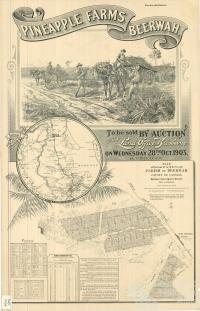 Pineapple farms, Beerwah, 1903