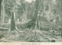 Clearing scrub, Babinda, c1925