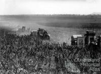 Harvesting the first sorghum crop on Peak Downs, June 1949