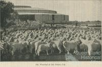 Woolshed at Isis Downs, 1933