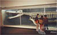 Kronosaurus queenslandicus at Harvard, 2001