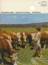 Hereford Herd, Coolum Research Station, 1966