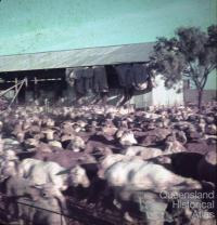 Shearing shed, Colston Homestead, Winton, 1979