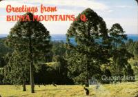 Bunya Mountains postcard
