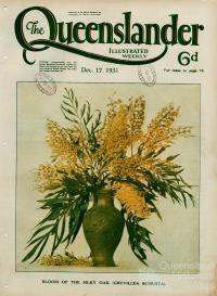 Bloom of the silky oak, The Queenslander, 17 December 1931