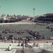 Cattle judging, main arena, Brisbane exhibition, Bowen Hills, c1980s