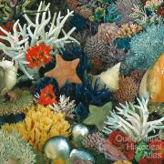 Coloured coral collection
