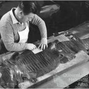Crocodile skin used for leather, 1968