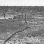 Brigalow suckered country near Tara, c1938