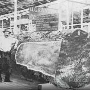 Cedar log at the 1897 exhibition, Bowen Park