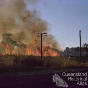Burning sugar cane near Cairns, 1965