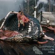 Flensing deck, Tangalooma whaling station, 1960